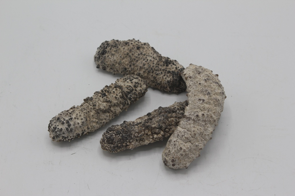Sea Cucumber (9-10 pcs/lb)