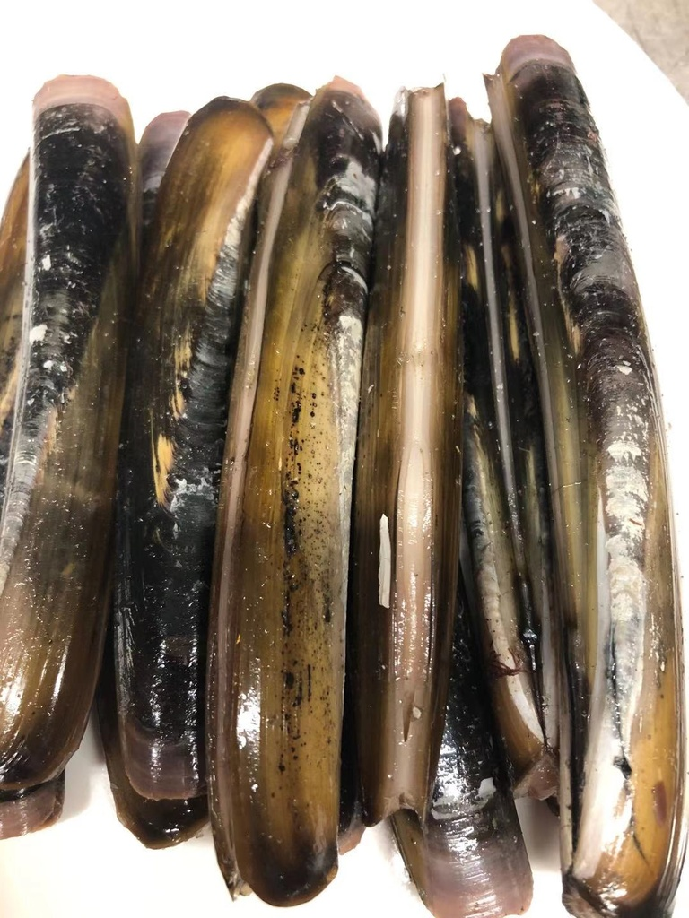 Fresh Long Island Razor Clams 2lbs/pack